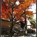 大德寺境內的楓樹