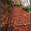 楓葉紅毯步道