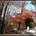 下鴨神社楓紅的時間是最晚
