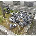 奈良車站外的一群鴿子