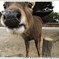 大頭鹿~~~還流口水咧!!