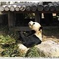 熊貓二號吃相溫柔多了