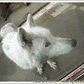 這是狼是狗??
