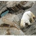 意外撿到北極熊