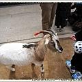 小不隆咚的小山羊