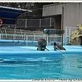 企鵝疊疊樂...疊起來比較好玩嗎??