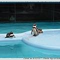 企鵝是露天的喔!!不用隔著玻璃感覺真棒