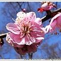 粉紅色的...假裝我在拍櫻花XD