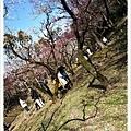梅花樹枝好明顯