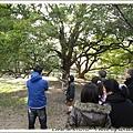 竹見老師在講解這棵樹