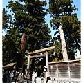 高聳的樹木