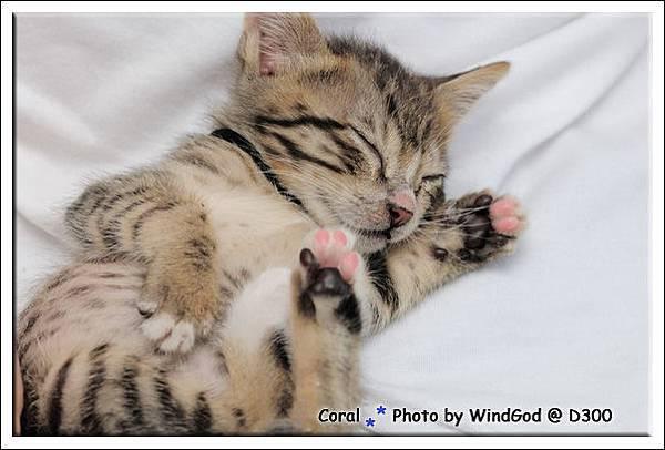 睡覺的模樣真可愛