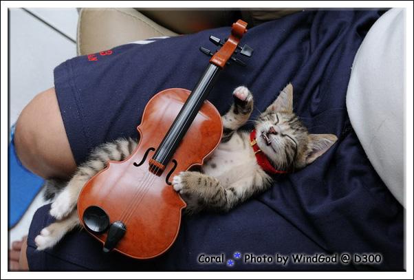 很有音樂素養