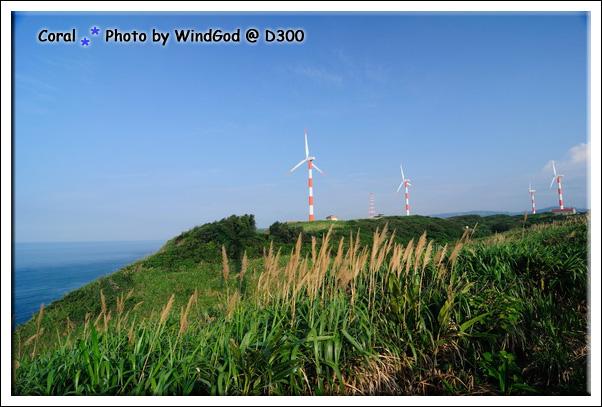好多風車呀!!