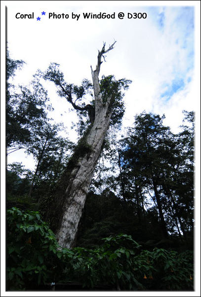 神木...老摳摳2800歲