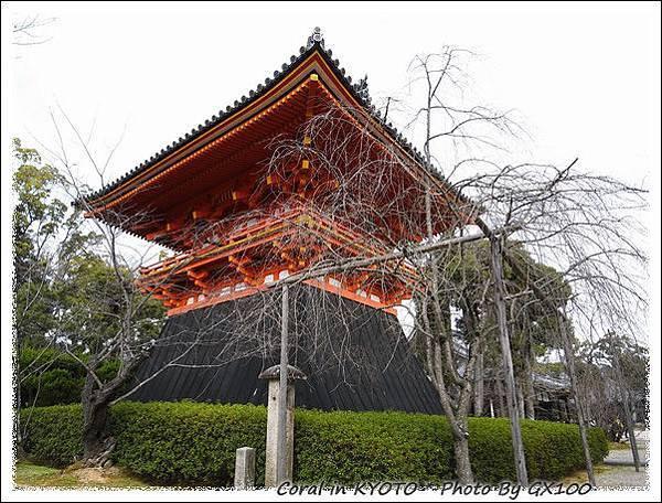仁和寺也是賞櫻著名景點之一