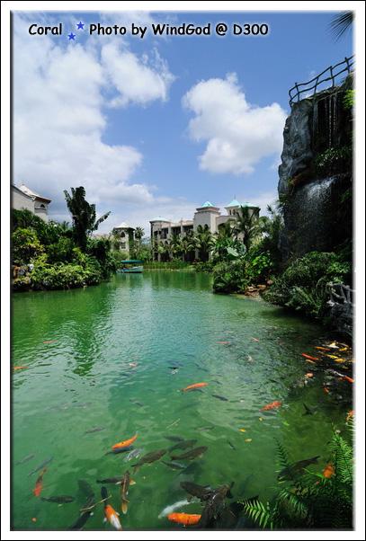 藍天綠水魚兒魚兒水中游