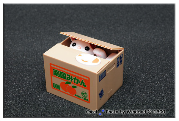 みかん箱裝的是小白貓