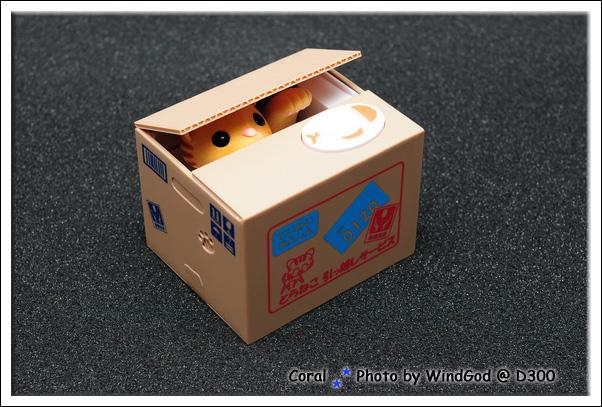 搬家箱子裝的是小黃貓