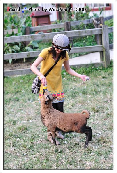 抱回去換另一隻肚子超餓的羊咩咩