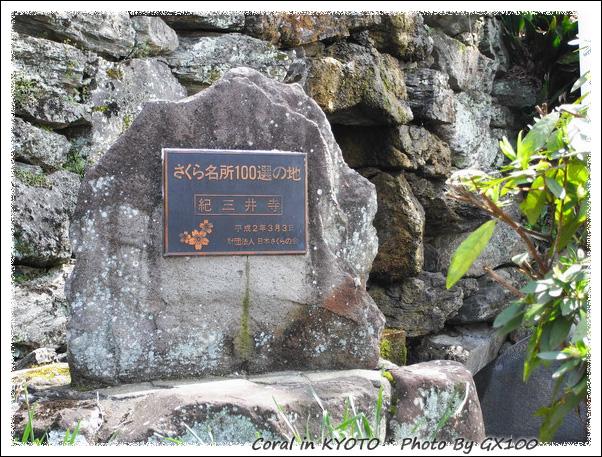 日本賞櫻百選之一的紀三井寺