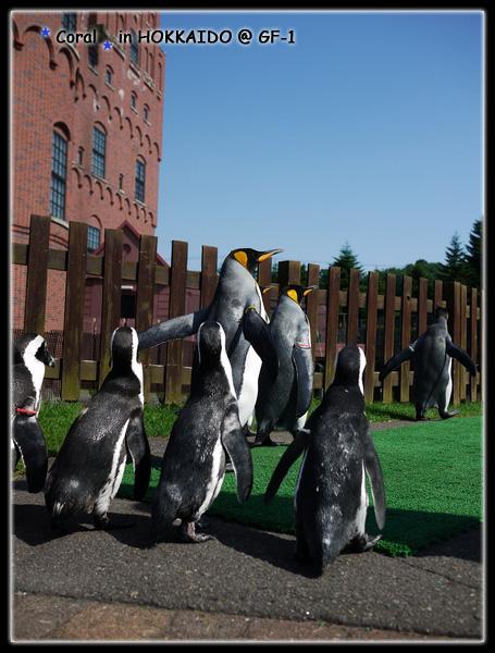 近距離與企鵝相見歡的感覺真棒