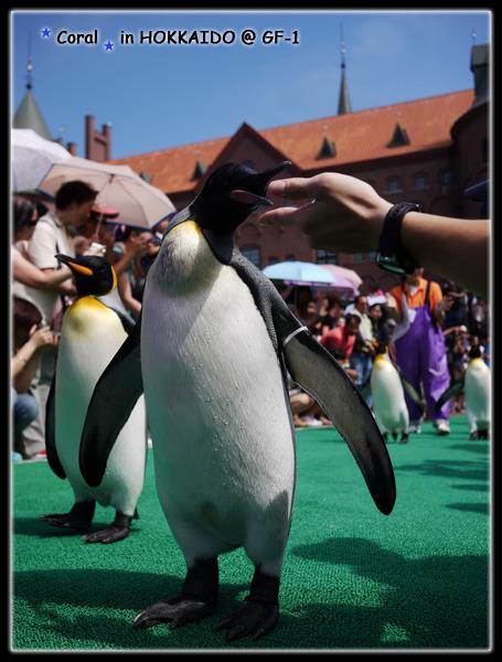 白目886...竟然想去摸企鵝,企鵝妳狠狠咬下去吧!!