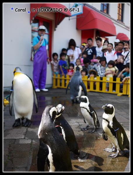 工作人員講解企鵝