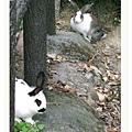 被野放的家兔or野兔