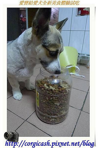 愛寶給愛犬全新美食體驗試吃