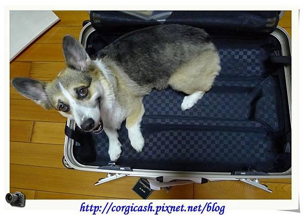 麻~~你買行李箱幹嘛