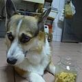 柚子麻手工餅乾好好吃