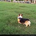 大草皮跑跑