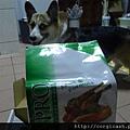 【體驗徵文】優格®幸福體驗-我跟狗寶貝更幸福了
