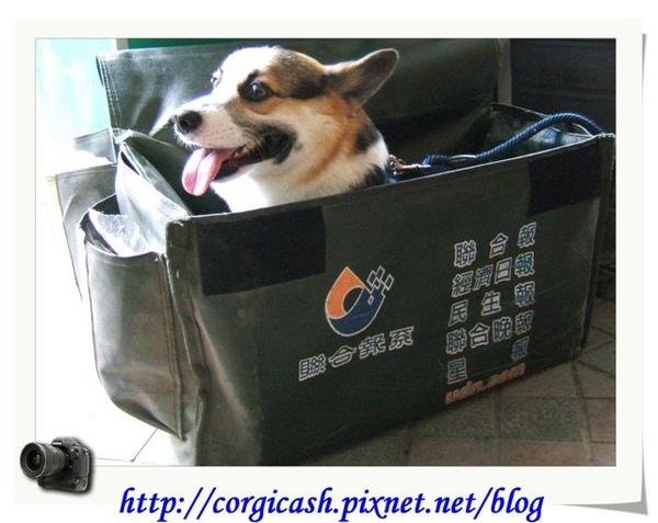 柯基cash專用車袋