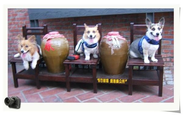三犬一日遊