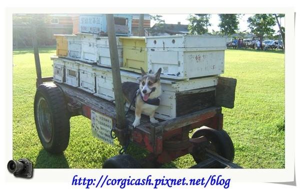 古坑蜜蜂故事館之牛車