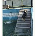 990410鹿和游泳