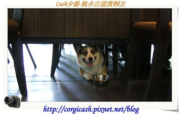 CASH IN 食話石說