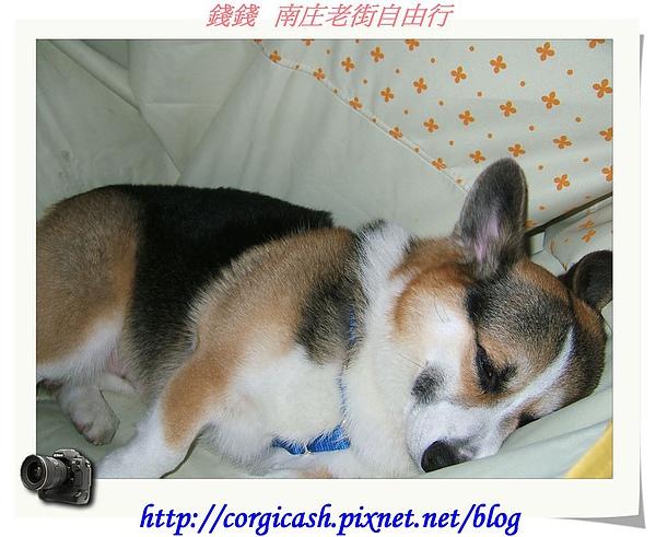 南庄好累行~睡攤
