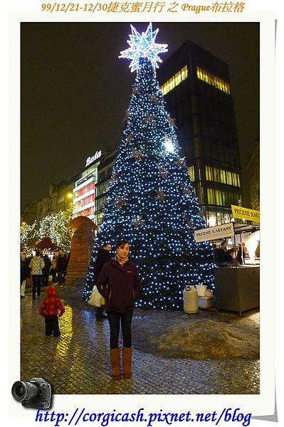 聖誕樹怎麼拍怎麼美