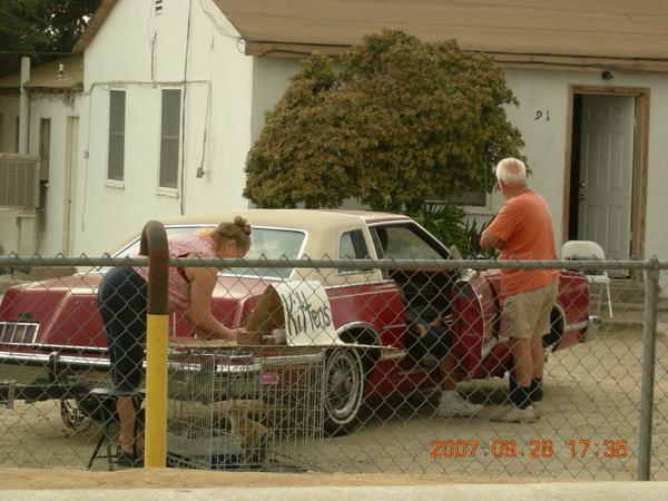 車庫拍賣他們的貓
