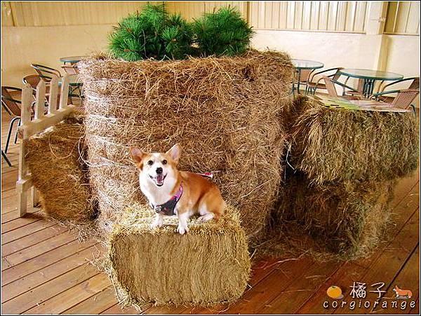 100號牧場的牧草捲裝飾.jpg
