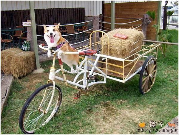 橘子騎三輪車.jpg