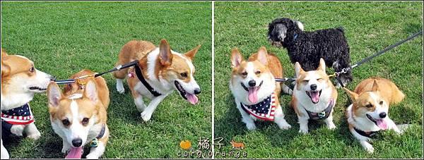 混亂三犬照.jpg