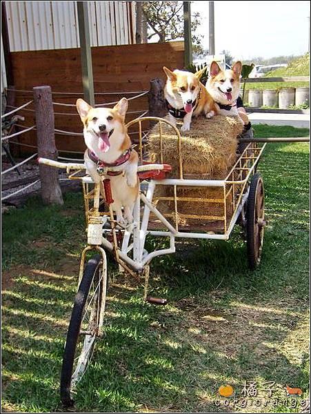 橘子騎車載卡ㄋㄟ跟阿醬.jpg