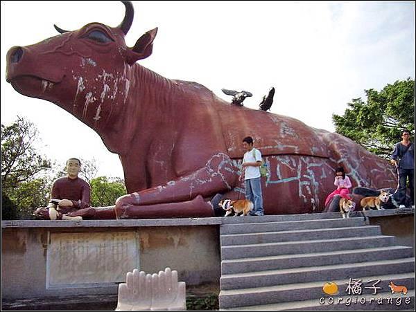 好大的牛.jpg