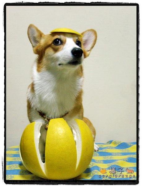 柚子小黃帽.jpg
