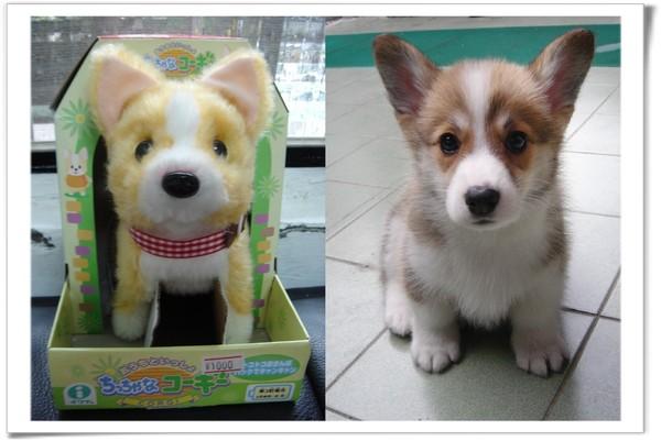 成田買的柯基玩具狗跟搜拉.jpg