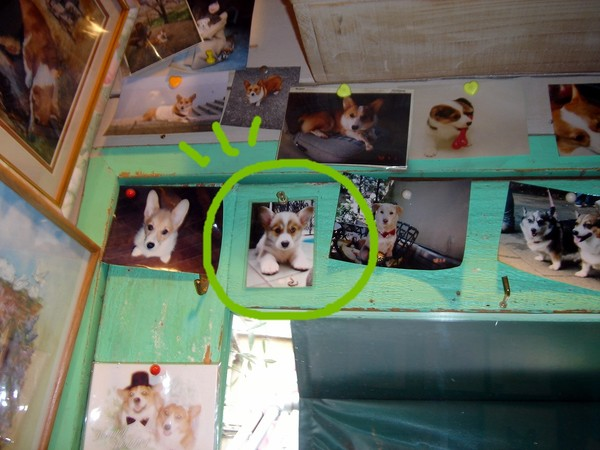 搜拉照片被貼在店裡囉.jpg